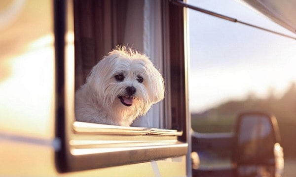 best pet temperature monitor for rv